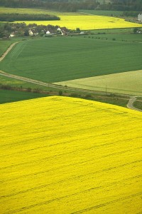 vue aérienne champ de colza orne